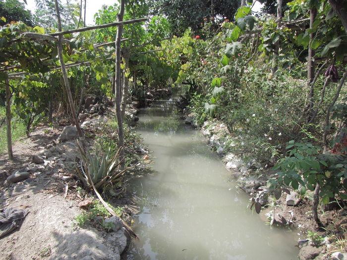 Ramadilla City Pampa Paraíso Camp Campo Camping Sèquia Tree Water Plant