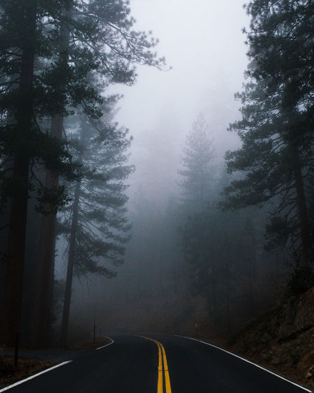 Cloud Day Diminishing Perspective Fog Foggy Forest Leading Leading Lines Mist Misty Motion Mystery National Park Outdoors Power In Nature Roadtrip Showcase: February Speed The Way Forward Vanishing Point Weather Yosemite National Park
