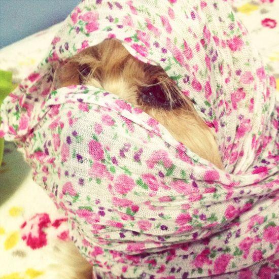 Ta frio aí?! Cold Winter ❄⛄ Dog Pet