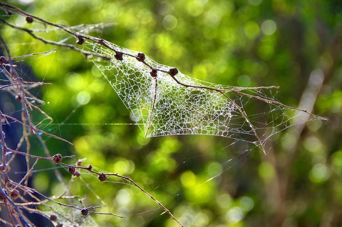 Beautifully Organized A confused, yet organised spider web. First Eyeem Photo