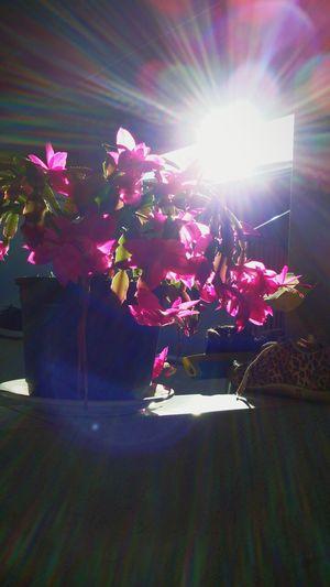 Flor 🌷🌸🌹⚘🍃🍂🌺🌻🌼 Flores Y Más Flores Rosas Flores Taking Photos