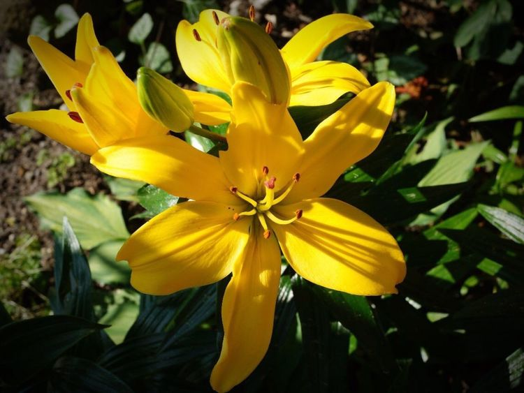 Flower Petal Yellow Fragility Flower Head Freshness Nature Beauty In Nature Growth Day Outdoors Blooming Close-up Plant