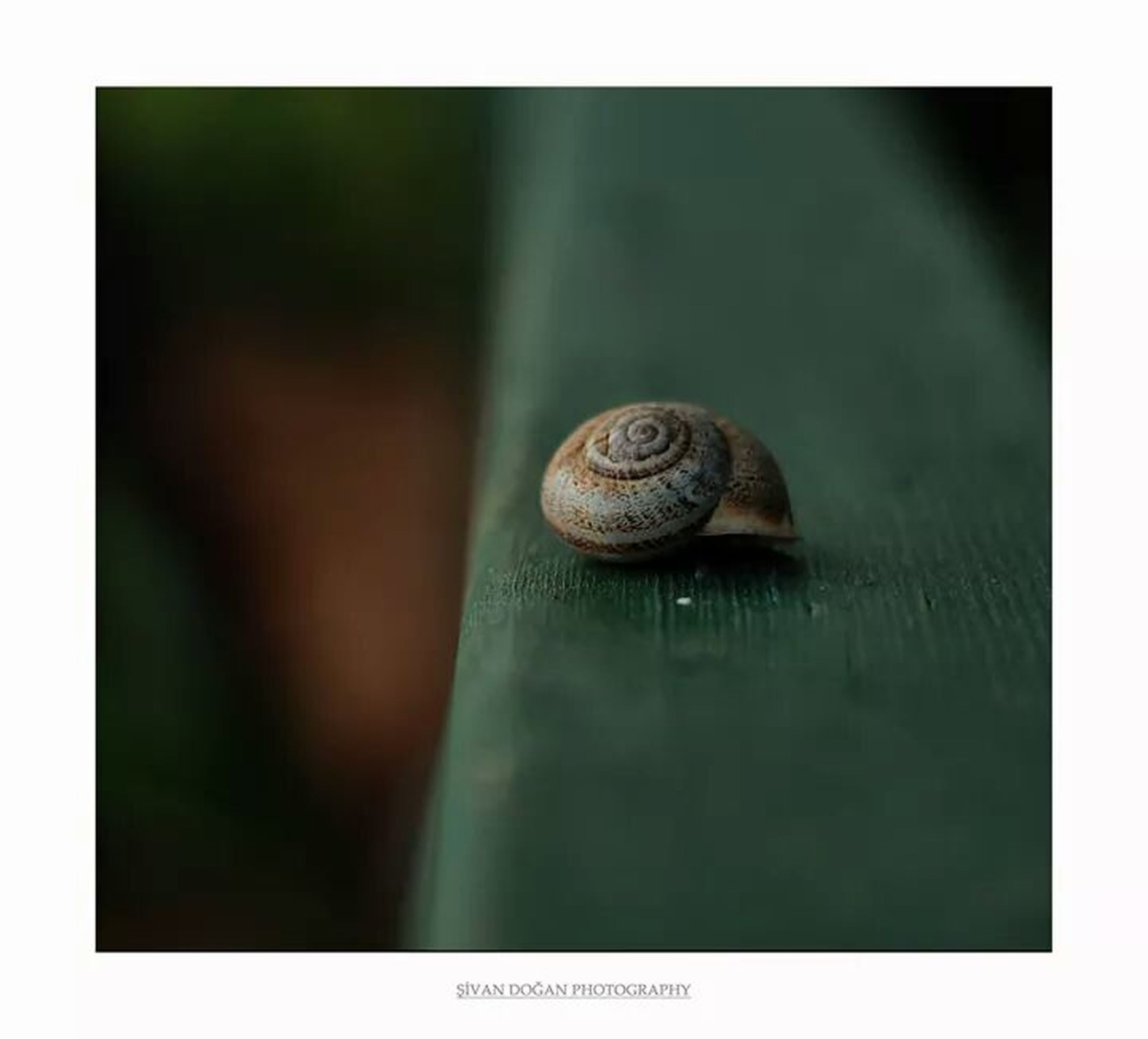 transfer print, animal themes, one animal, wildlife, animals in the wild, snail, auto post production filter, close-up, animal shell, water, selective focus, nature, reflection, shell, outdoors, no people, mollusk, day, focus on foreground, wet