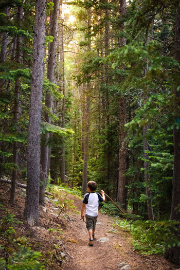Beauty In Nature Colorado Day Forest Full Length Green Green Color Hike Hiking Showcase June Exploring Lifestyles Trees Mountains Nature Nature_collection Outdoors Plant The Way Forward Trails Tranquility Tree Walk Let's Go. Together.