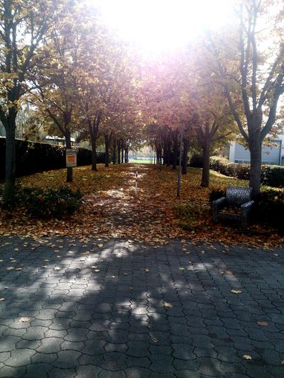 Fellbach Leaves Alley .01.16