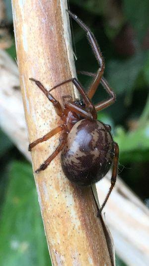 Arachnid Spider Makro Makrobug Bugs