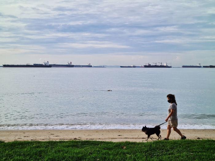 Dog on beach