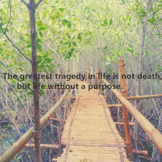 Day Lifequotes Nature Nature Nature Photography No People Outdoors Quoteoftheday Quotes Quotestoliveby Text Tree