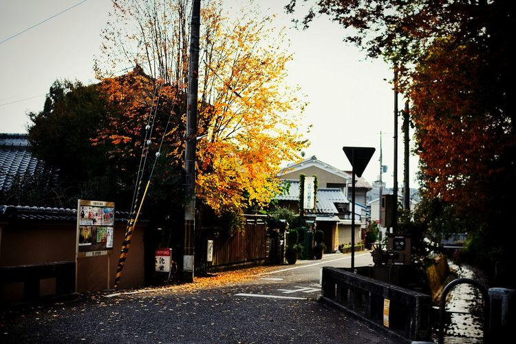 Tree Sky Outdoors Nature Architecture 京都 The Architect - 2016 EyeEm Awards 2016 EyeEm Nature 紅葉 Beauty In Nature The Street Photographer - 2016 EyeEm Awards Beautiful 秋 Autumn Fine Art Photography 2016 EyeEm Awards Eye4photography  Yellow Sunset Sunshine Light And Shadow Fall On The Road Kyoto Street Photography Place Of Heart