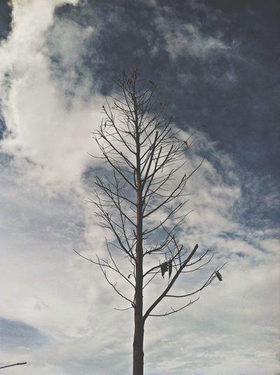 Like autumn Nature Tree Sky