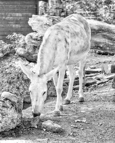 Tiere Tier Animal Animal Photography Animals Tierfotografie Maultier