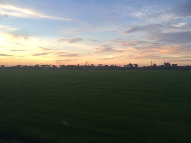 Ricefield View Train Windowsview Sunnyafternoon