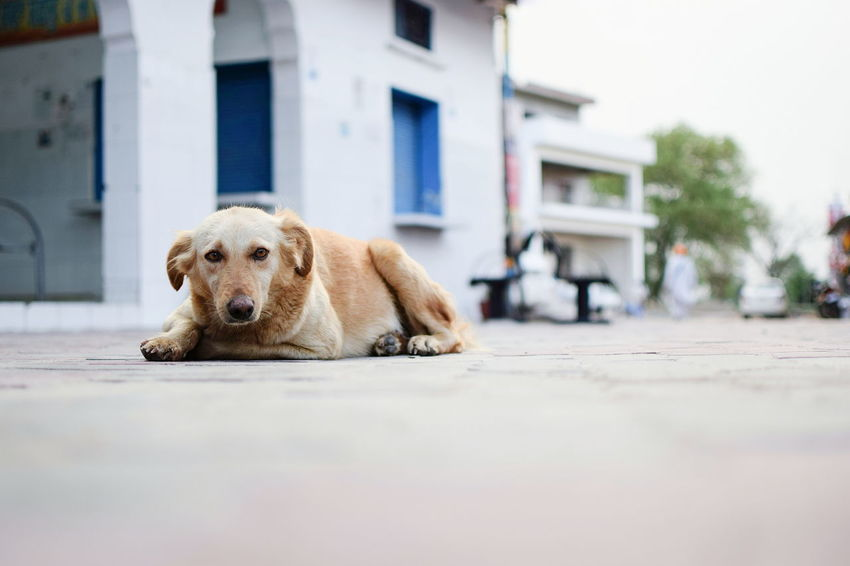 InMakin! Dog Stray Dog Selective Focus Randomness Cute Street Outdoors Pet Portraits EyeEm Ready   Stories From The City