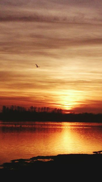 Sunset Silhouette Reflection Beauty In Nature Dramatic Sky Scenics Bird Sky Water Animal Wildlife Tranquility No People Flying Outdoors Lake Landscape Lone Bird