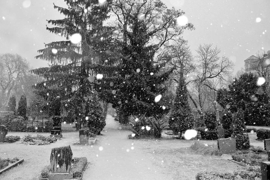 Berlin Cementery Friedhof Kreuzberg No People S/w Schnee Snow Tag Trzoska Winter