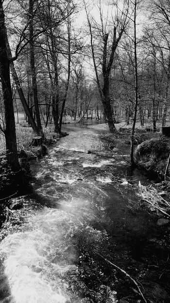 Fiskars Finland Spring 2015  Check This Out Hanging Out Taking Photos Nature B&w Photography