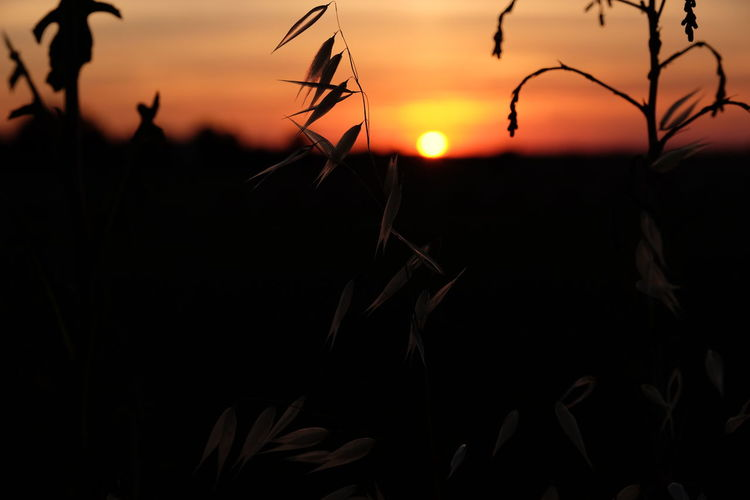 Field No People Plant Silhouette Sunset Tranquility
