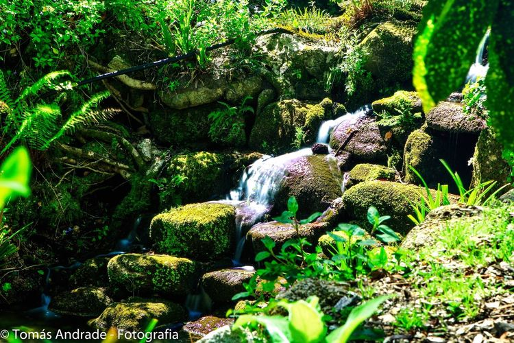 Rock - Object Nature Green Color Moss Beauty In Nature No People Outdoors Plant Growth Day Tranquility Water Scenics Tree Waterfall