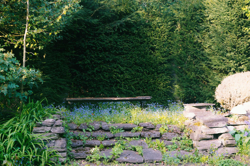 Plants and bench in garden