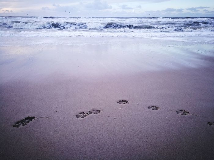 Beach Animals In The Wild No People Outdoors Animal Wildlife Nature Sand ckCold Temperature Day Sea Sky Beauty In Nature Tracks In The Sand Dogtracks