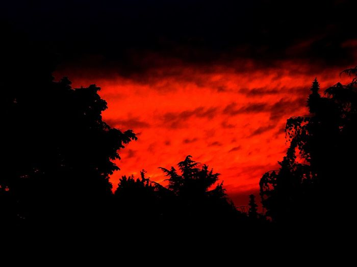 Silhouette Sky Beauty In Nature Sunset Tree Orange Color Cloud - Sky Scenics - Nature Plant No People Tranquility Nature Low Angle View Red Dramatic Sky Tranquil Scene Idyllic Outdoors Non-urban Scene Growth