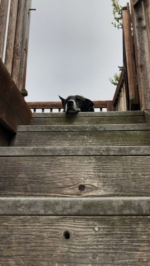 Low angle view of a dog on wooden wall