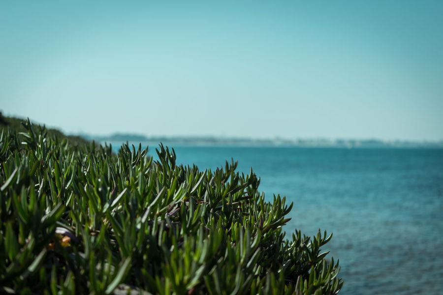 City Green Landscape Mahdia Mahdia/Tunisia Sea Sea And Sky EyeEmNewHere.