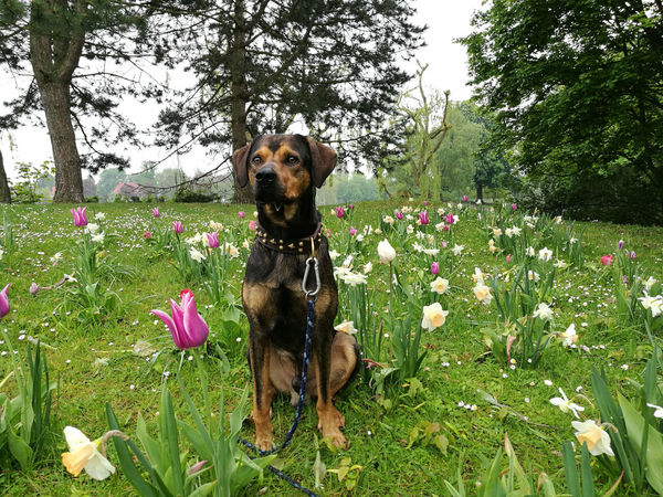 Dog Flower Pets Growth Domestic Animals Nature Green Color Day Outdoors One Animal Plant No People Animal Themes Tree Grass Water Beauty In Nature Green Color Carl ❤