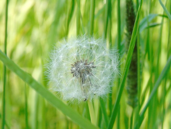 Flowers Outdoors Nature_collection EyeEm Nature Lover Grass Green Field Nature