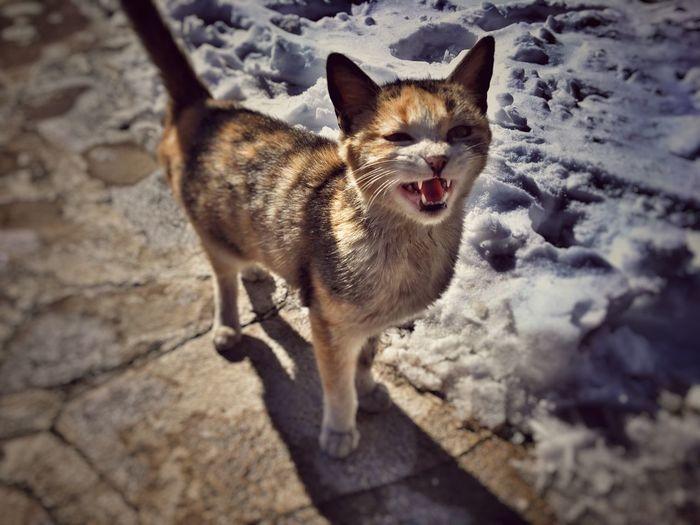 Kitten Cat Snow Cold Kedi