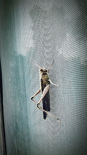 Bugs Window Screen Saturday December Winter Bored LOL What Did You Do On You're Weekend? Just Making Up Random Hash Tags Creepy Crawly