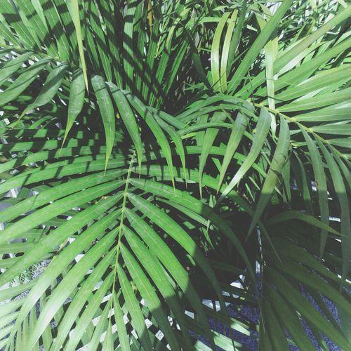 palms. Palms