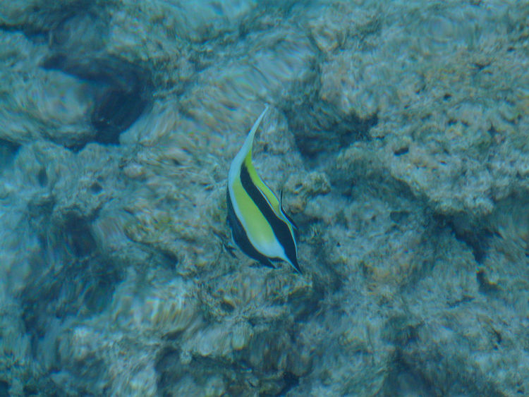 Animal Themes Animal Wildlife Animals In The Wild Beauty In Nature Close-up Day Fish Mammal Nature No People One Animal Outdoors Sea Sea Life Swimming UnderSea Underwater Water