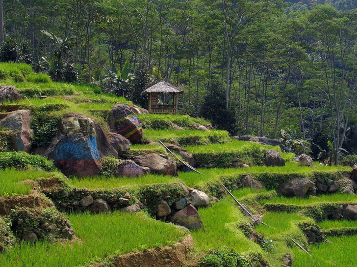 Scenic view of land