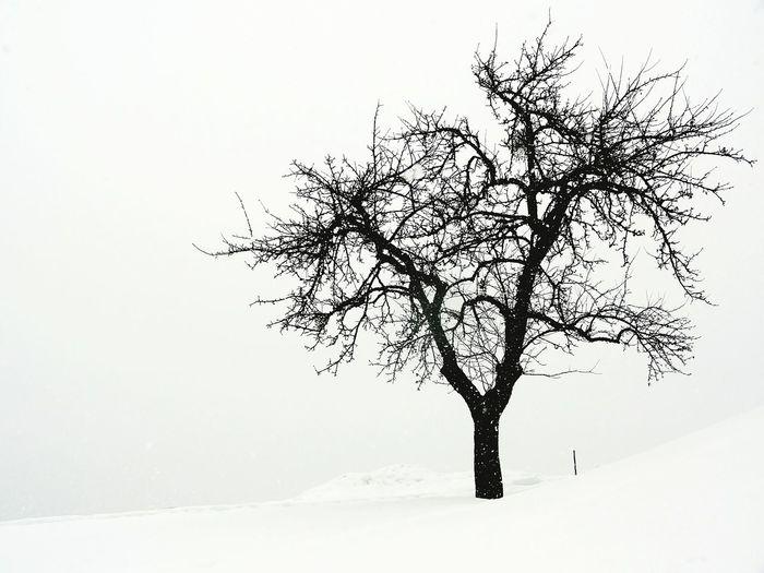 Treegasmic