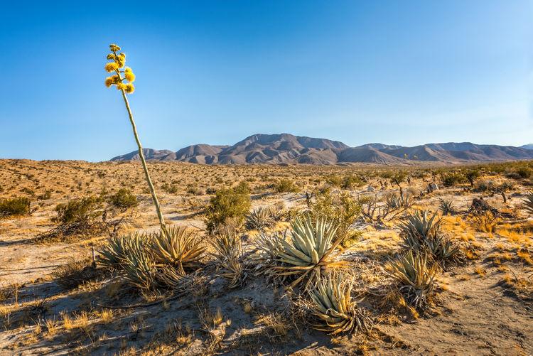 Plants growing in desert against sky