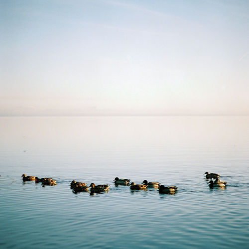 Scenic view of ducks swimming in sea against sky