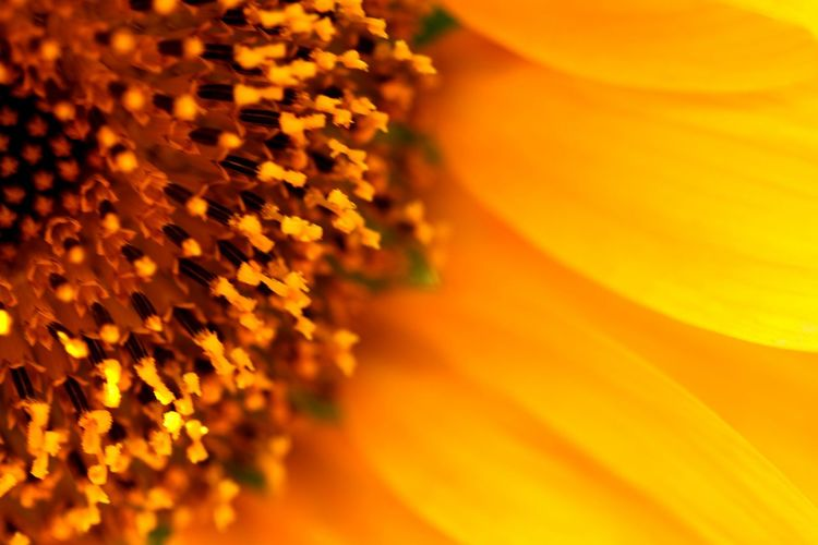 Yellow makes everything better Colour Of Life Sunflower🌻 Yellowmellow