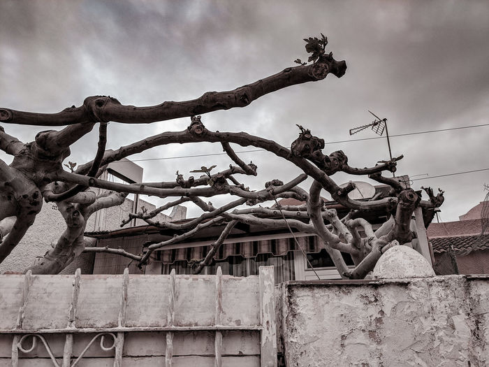 crazy fig tree over a garden Fig Tree Shaped Tree Branches Garden Gardening Postapocalyptic Post Apocalyptic SPAIN Alien Alien Tree Crooked Tree Sky Architecture Residential Structure Building Residential Building Passageway Residential  Settlement Building Exterior Human Settlement Built Structure Tall Exterior Tall - High