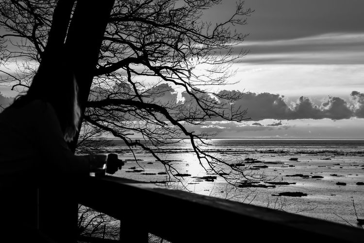 sunset along great lake shore Bradley Olson Bradleywarren Photography Backgrounds Background No People Room For Text Room For Copy Copy Space Copyspace Vintage Old Water Scenics - Nature Beauty In Nature Plant Nature Outdoors Lake Lakeside Lake View Lakeshore Lakeview Lake Erie Great Lake Great Lakes Tourism Tourist Tourist Attraction  Tourist Destination Cloud - Sky Sky Tranquility Tree Tranquil Scene Silhouette Sea Bare Tree Land Beach Branch Tree Trunk Sunset Beauty In Nature