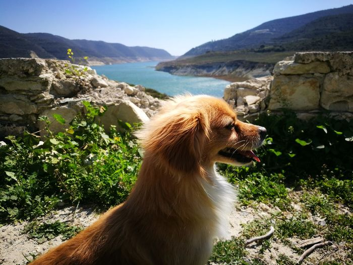 One Animal Landscape Scenics No People Animal Themes Beauty In Nature Close-up Day Outdoors Happysnout Happydog Happy :) Dogselfie Dogs Of EyeEm Dogslife Inti Intidog Nature Dam Mountain Mammal Natural Parkland No Filter Pet Portraits