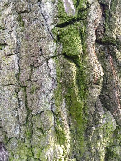 Bark Mossy Moss Close-up Textures And Surfaces Tree
