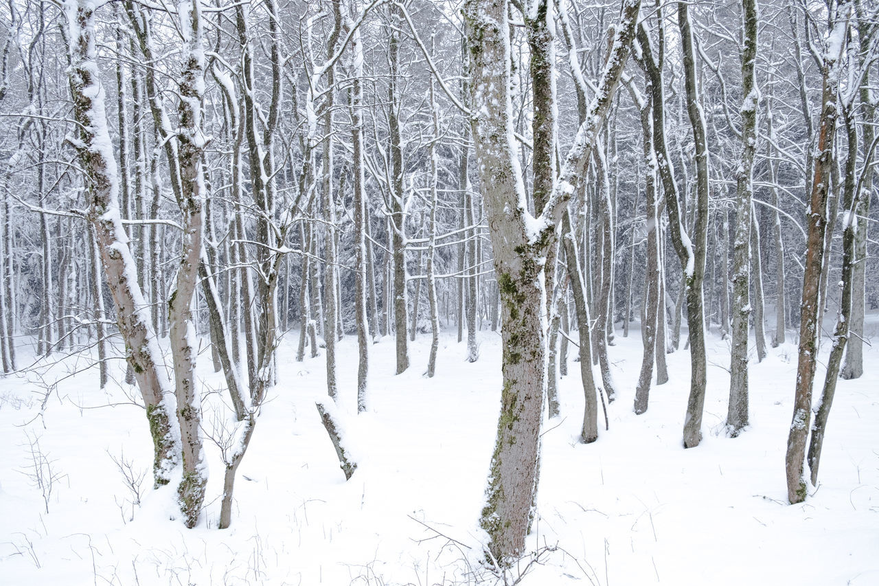 snow, cold temperature, winter, tranquil scene, white color, nature, tranquility, beauty in nature, landscape, forest, tree, scenics, no people, frozen, outdoors, snowing, polar climate, day, bare tree
