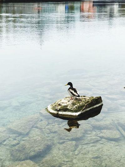 Duck view Rock