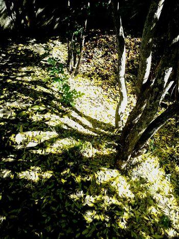 """"""" A llegado el otoño al jardin del Totem """""""