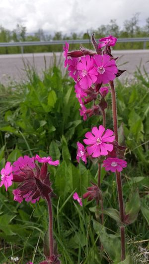 Flower Pink Color Nature Day Beauty In Nature Summer ☀ Motorhome Life