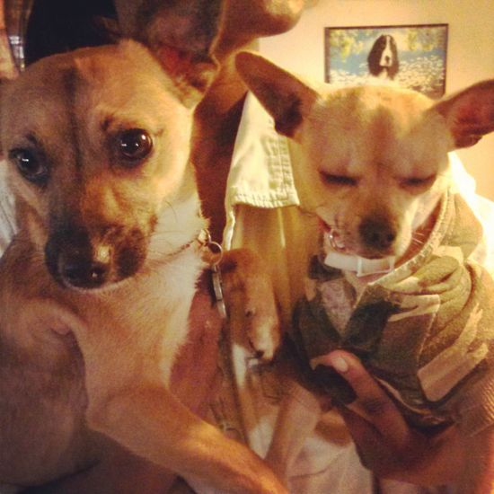 my puppy love and his bro (right) on their bday! TheMinimals (less Edit Juxt Photography) Taking Photos Today My Baby