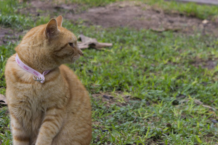 Close-up of ginger cat sitting on grass