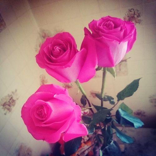 Roze Lilou♡ розы любимый подарок 8марта