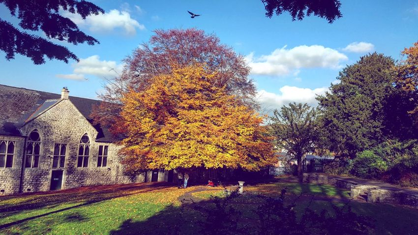 Amazing sunny day! 😍 Stroud Gloucestershire Walking Around Autumn Colors Sopretty Sunny And Cold Day